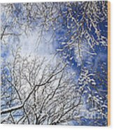 Winter Trees And Blue Sky Wood Print