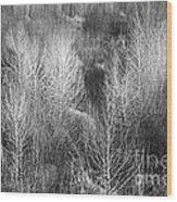 Winter Trees  B And W 1 Wood Print