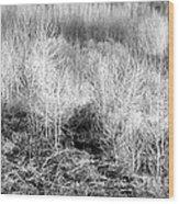 Winter Trees B And W 3 Wood Print