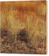 Winter Trees Color 3 Wood Print