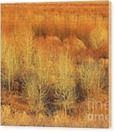 Winter Trees Color  7 Wood Print