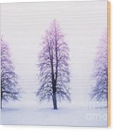 Winter Trees In Fog At Sunrise Wood Print by Elena Elisseeva