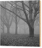 Winter Trees In The Mist Wood Print by Georgia Fowler