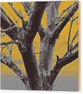 Winter Trees In Yellow Gray Mist 2 Wood Print