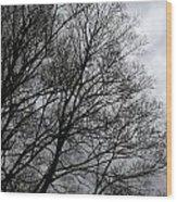 Winter Trees Number Three Wood Print