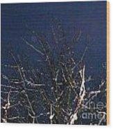 Winter Treetop Wood Print