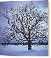 Winter Twilight Tree Wood Print