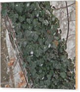 Winter Vine Wood Print