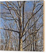 Winter White Oak Wood Print