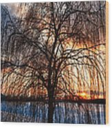 Winter Willow Wood Print