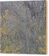 Winter Willows II Wood Print