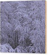 Winter Wonderland 1 Wood Print by Mike McGlothlen