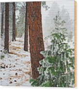 Winter Woodland Pine Tree Wood Print
