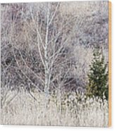 Winter Woodland With Subdued Colors Wood Print