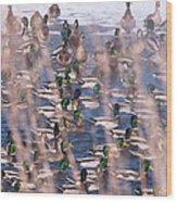 Wintering Mallards Wood Print