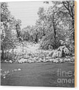 Winter's Blanket 2 Wood Print