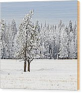 Winter's Coat Wood Print by Dee Cresswell