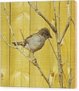 Winters end the sparrows branch  Wood Print