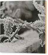 Winters Frost Wood Print by Karen Grist