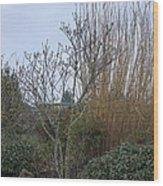 Winters Garden In Seattle  Wood Print