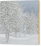 Winter's Glory - Grand Tetons Wood Print by Sandra Bronstein