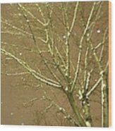 Winter's Golden Tree And Suspended Snow Wood Print