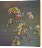 Winter's Oak Sapling Wood Print