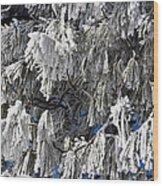 Winter's Paintbrushes Wood Print