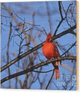 Winter's Red Beauty 5 Wood Print