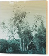 Winter's Tree Wood Print