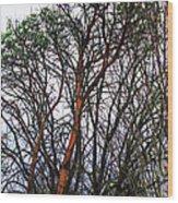 Winters Trees  Wood Print