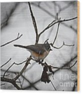 Winter's Tufted Titmouse Wood Print