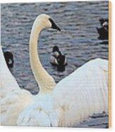 Winter's White Swan Wood Print