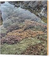 Wintertime At Botanical Beach Wood Print