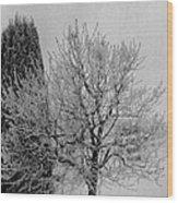 Wintery Tree Wood Print