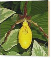 Wisconsin Yellow Lady Slipper Wood Print