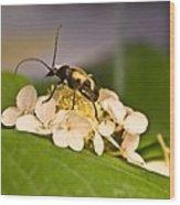 Wise Beetle Wood Print