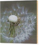 Wispy Dandelion Fluff Wood Print