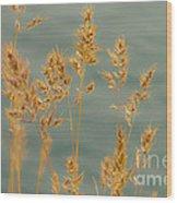 Wispy Grass Wood Print by Sarah Crites
