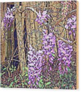 Wisteria And Old Fence Wood Print