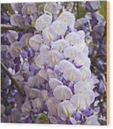 Wisteria Blooms Wood Print