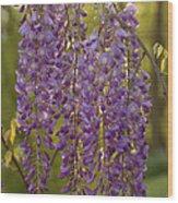 Wisteria Clusters Wood Print