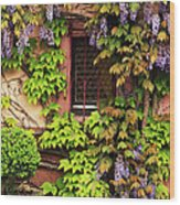Wisteria On A Home In Zellenberg France 3 Wood Print