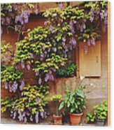 Wisteria On Home In Zellenberg 4 Wood Print