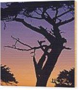 Witch Tree Monterey California Wood Print