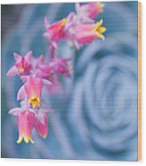 with affection - Echeveria glauca Wood Print