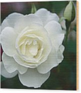 Withe Rose Wood Print