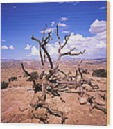 Withered Tree Paria Canyon Wood Print