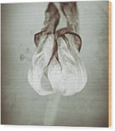 Withering Tulips 8 Wood Print