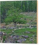 Witness Tree Devils Den Wood Print by William Fox